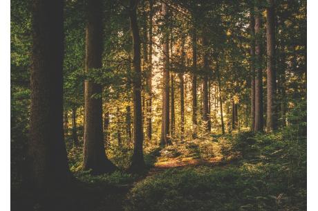 Rolnicy mogą uzyskac dotację na posadzenie lasu. fot. ARC