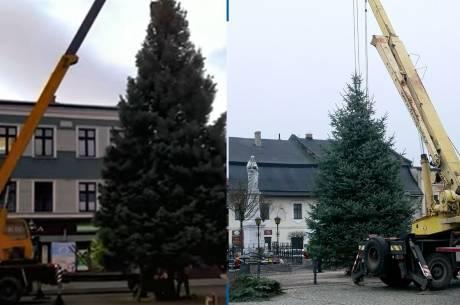 Bożonarodzeniowe drzewka w Skoczowie i Strumieniu fot. UM Skoczów, UM Strumień