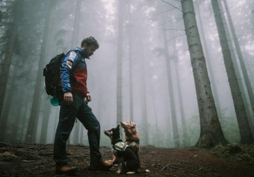 Psom ratownikom, na co dzień pracującym w GOPR można pomóc za pośrednictwem portalu zrzutka.pl fot. GOPR BESKIDY