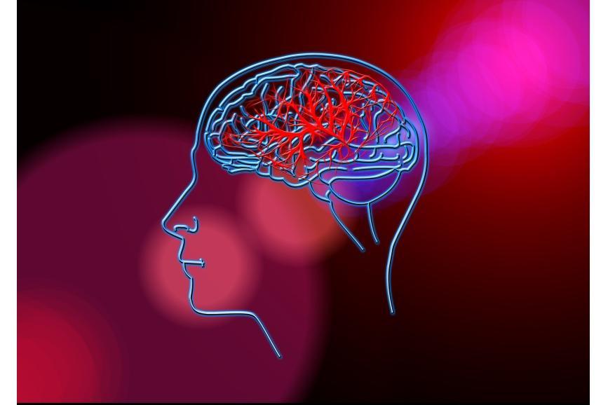 Rysunek głowy człowieka i mózgu
