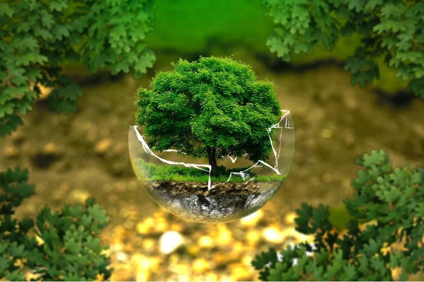 Drzewko w rozbitej szklanej kuli